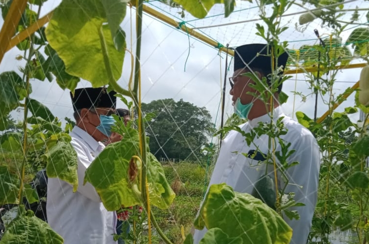 Bupati Rohil : Lahan 3 Hektare Akan Dijakdikan Icon Baru Di MTQ 2021