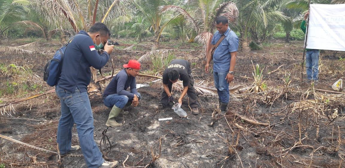 Warga Inhil di Amankan Polisi Akibat Membakar Tumpukan Pelepah Kelapa Kering