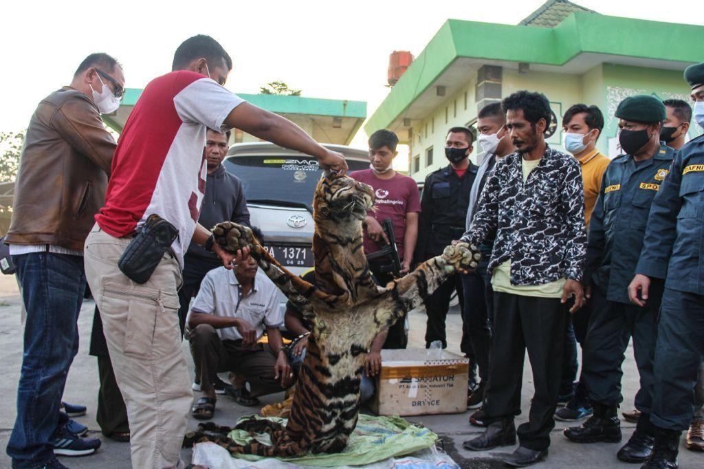 Tim Gabungan Krimsus dan Petugas BKSDA Tangkap 4 Orang Penjual Kulit Satwa di Lindungi