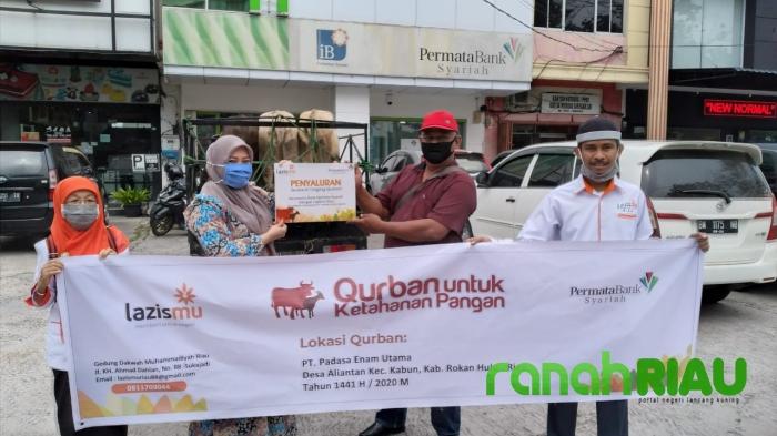 Kerjasama dengan Bank Permata Syariah, Lazismu Riau salurkan 5 Sapi qurban ke Rokan Hulu