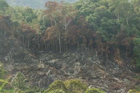 Kementrian Izinkan Perusahaan Terdakwa Pembakar Lahan