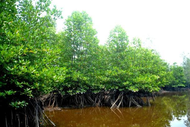 Ekowisata Mangrove di Reteh Akan Dikembangkan