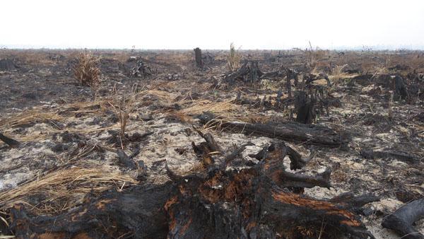 Perbaiki 933.000 Hektare Kerusakan Gambut Riau