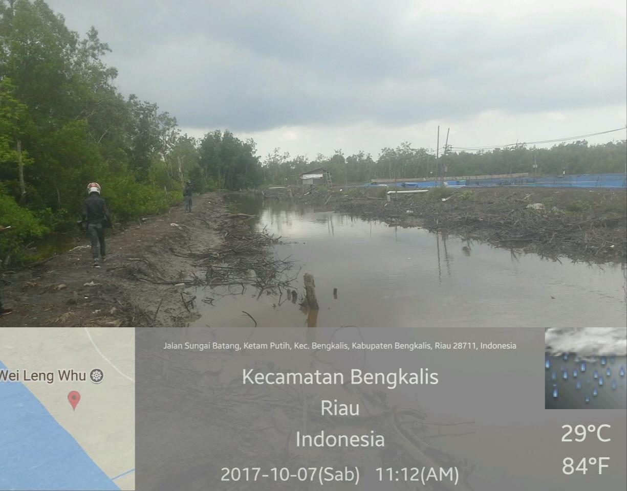 Ulah Pengusaha, Hutan Lindung Mangrove di Babat Menjadi Tambak Udang