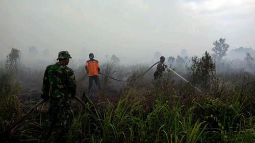 30 Hektar Lahan Gambut di Teluk Meranti Terbakar