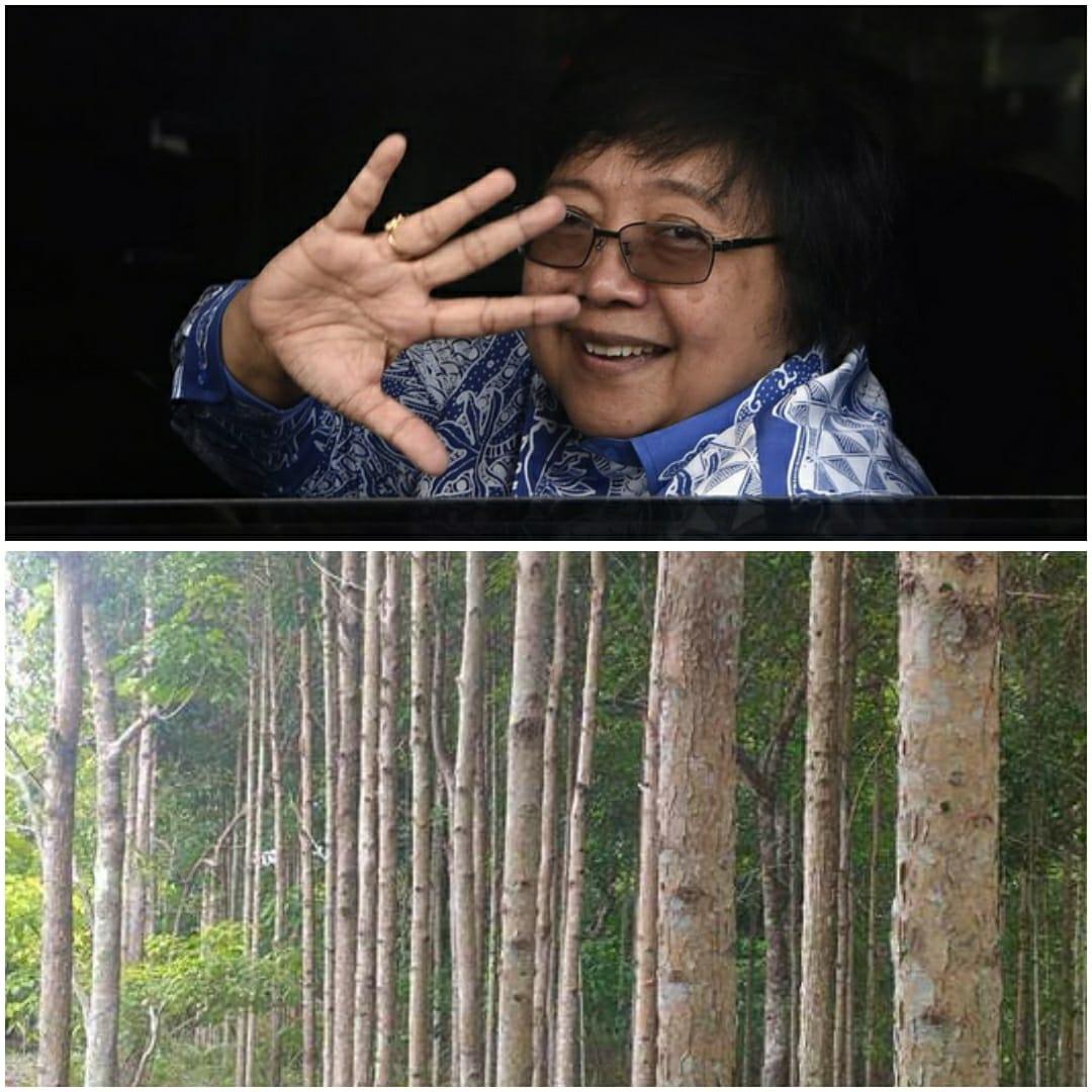Kementerian LHK tanggap positif budidaya Kayu Gerunggang