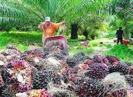 PGN Diharapkan Pasok Gas ke Perusahaan Sawit di Riau