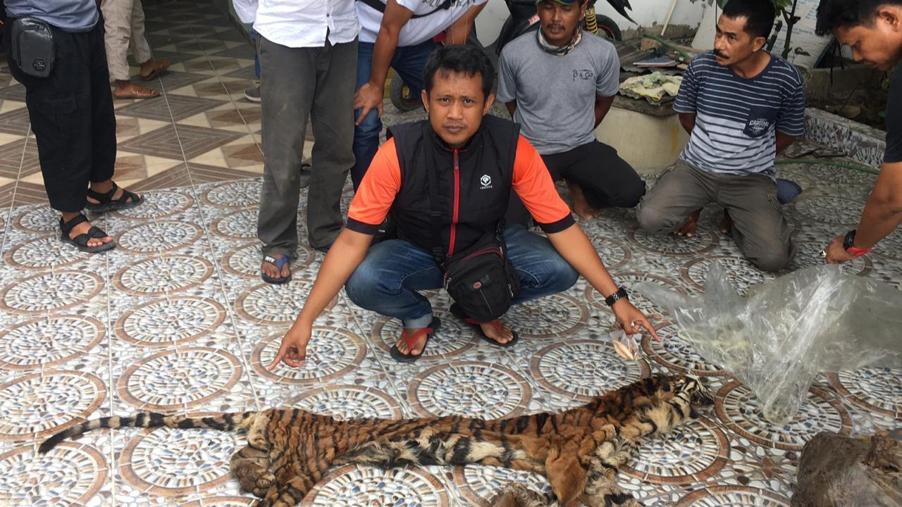 Perdagangan Organ Harimau Berhasil Diungkap Polda Riau