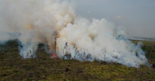 Satgas Darat dan Udara Berjibaku Padamkan Api