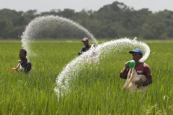 Nilai Tukar Petani Tanaman Pangan Riau Menurun