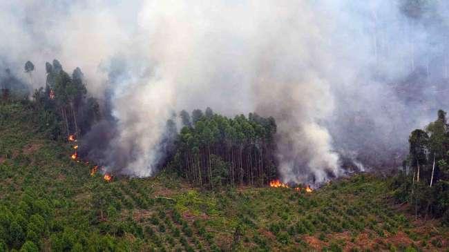 Terra Aqua Deteksi 98 Titik Api di Riau