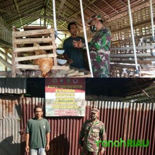 Babinsa Komsos Ke Ternak Ayam Petelur Di Wilayah Binaan