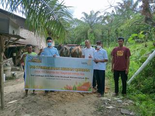 Distribusi Qurban lima belas sapi  LazisMu Riau ke daerah