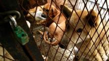 Korsel Tutup Rumah Penjagalan Anjing Terbesar