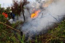 Menteri LHK Minta Kasus Karhutla Riau Diselesaikan