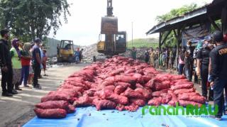 BC Bengkalis Lakukan Pemusnahan Barang Bukti 1.155 Karung Bawang Merah Ilegal