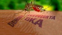 Masyarakat Diminta Waspadai Virus Zika